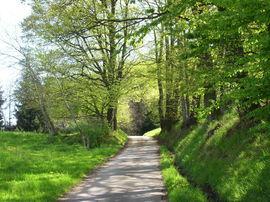 "Der Großwaldweg beim Waldeingang ""Wälder Tor"""